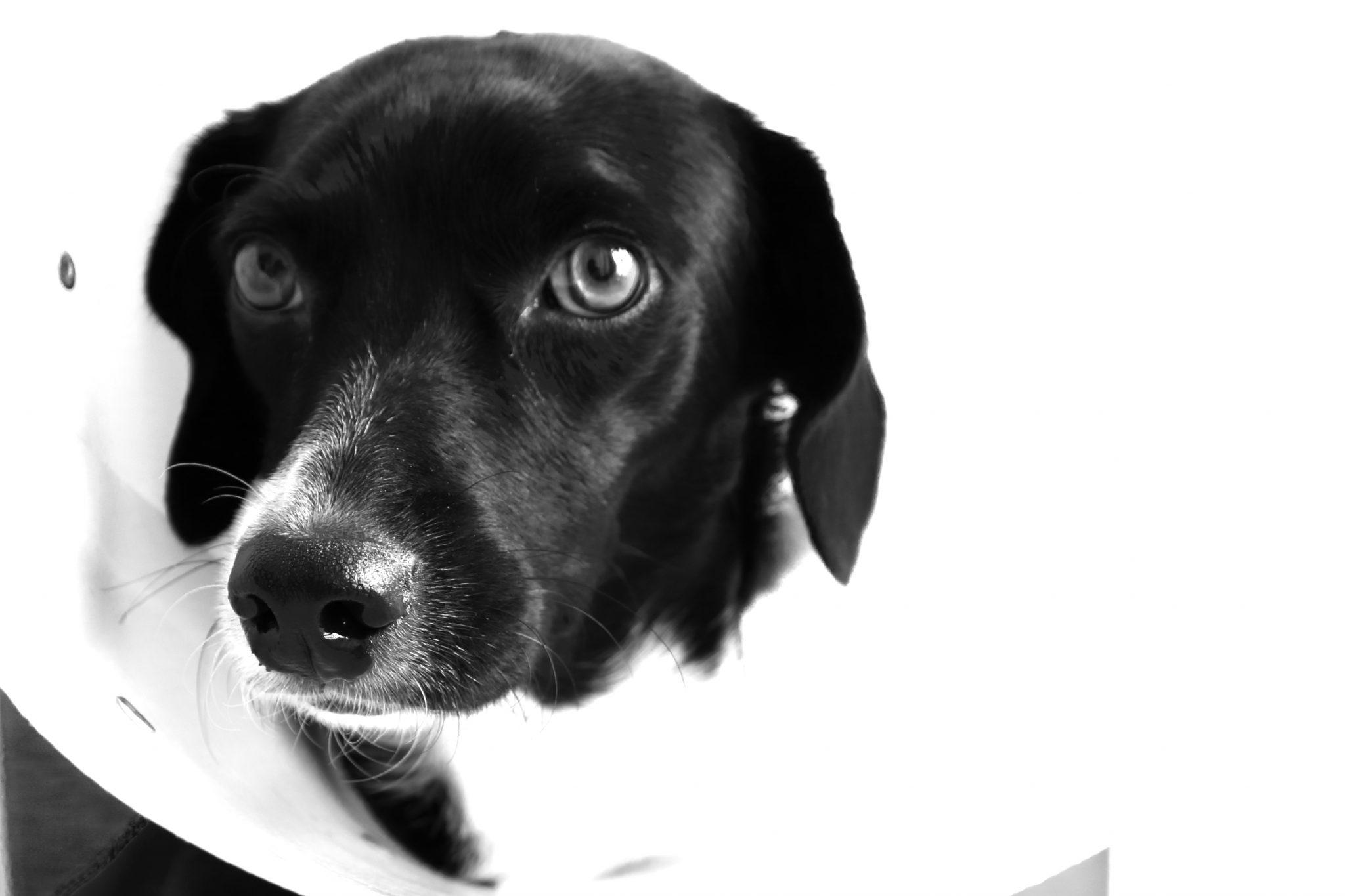 foto-cachorro-usando-cone