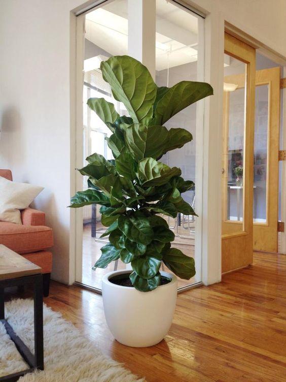planta-na-decoracao