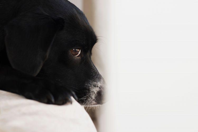 dinha-cachorro