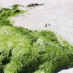 praia-do-farol