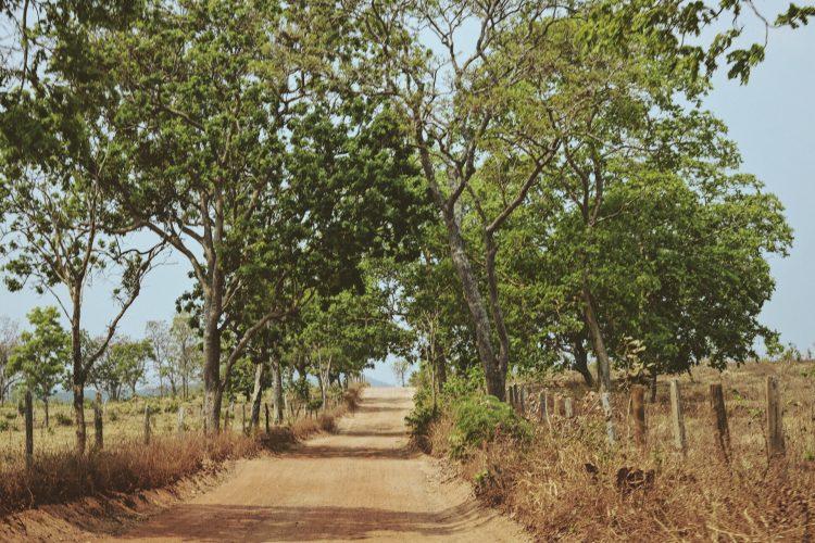 fotografia-estrada-de-terra