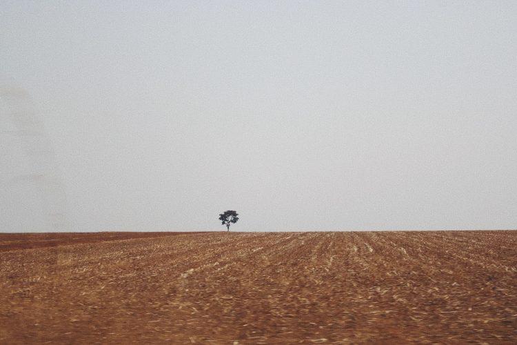 fotografia-arvore-isolada-na-estrada