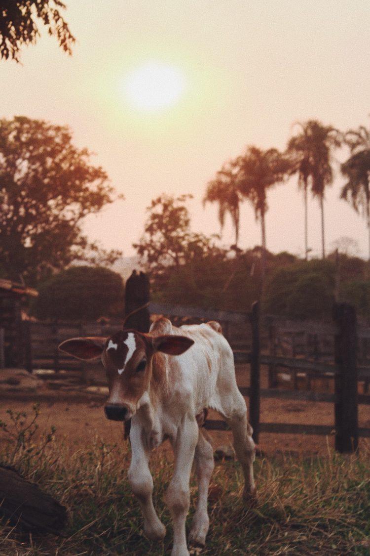 cavalinho-ao-por-do-sol