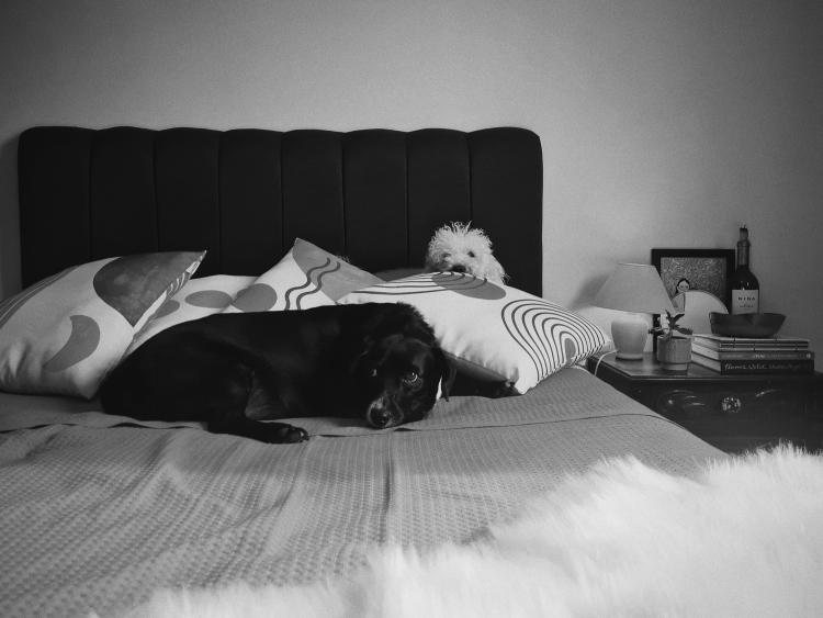 cachorros-deitados-na-cama